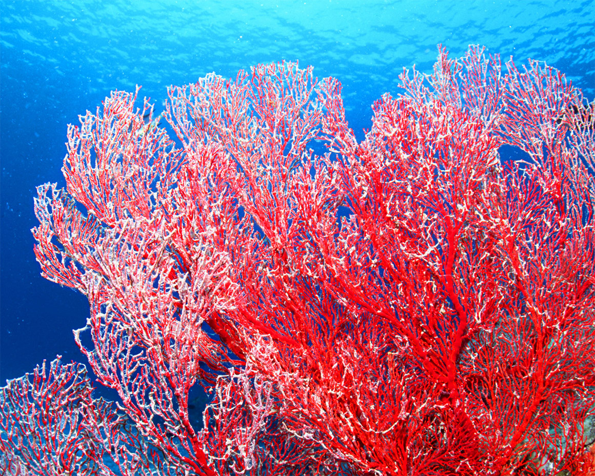 SOYUAR Stoffhighlight Coral Impression